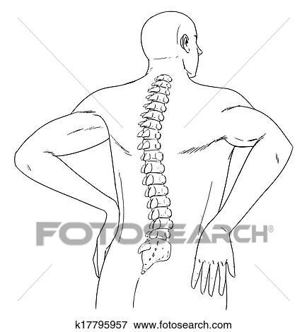 Clip Art Of Human Spine K17795957