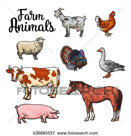 Animaux de la ferme dessin couleur - Images d animaux de la ferme ...