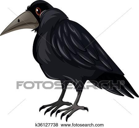 الغراب الأسود تصنيف على أبيض الخلفية Clip Art K36127738 Fotosearch