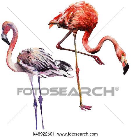 clipart céu pássaro flamingo em um fauna por aquarela