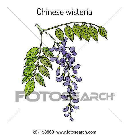 Watercolor Flower Clipart Wisteria By FOXYdigitalart | TheHungryJPEG.com