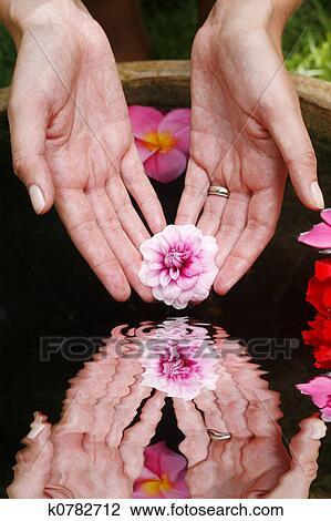 Banque De Photo Fleur Main Reflet K0782712 Recherchez Des