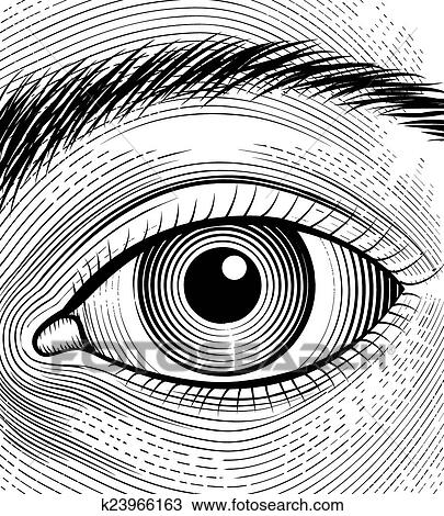 Engraving Human Eye Clipart
