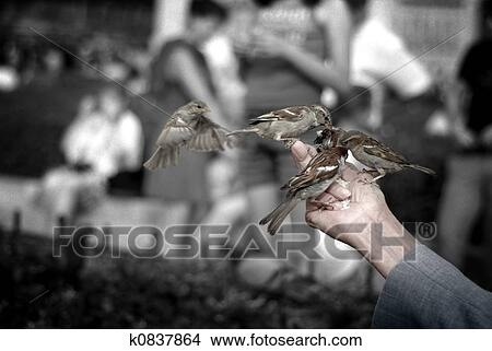 Low saturation image of an old man feeding sparrows, with black and white  background  Image has a film grain effect added to it  Picture