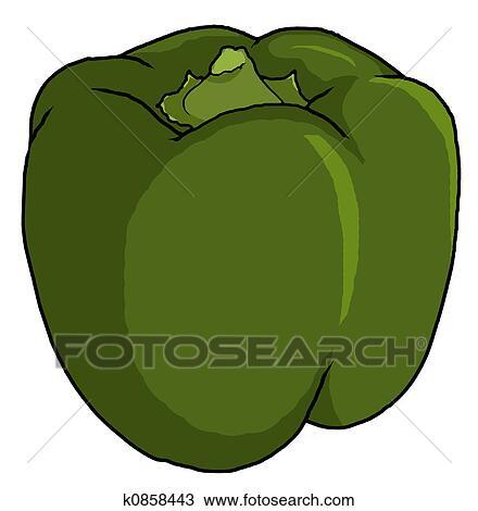 緑のピーマン イラスト スケッチ K0858443 Fotosearch