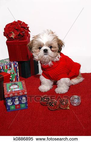 Natal Filhote Cachorro Arquivos De Fotografia K0886895