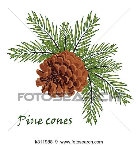 Clip Art Fir Tree Branches With Pine Cone On White Background Fotosearch
