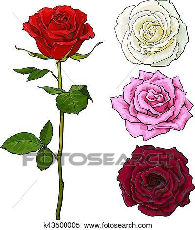 Ensemble De Rose Blanc Rose Rouge Sommet Et Vue Côté Clipart