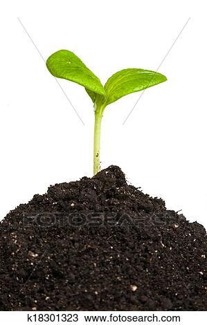 banque de photo tas terre a plante verte pousse isol k18301323 recherchez des. Black Bedroom Furniture Sets. Home Design Ideas