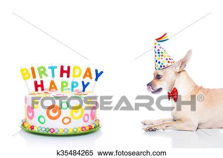 gelukkige verjaardag, hond stock fotografie | k35484265 | fotosearch