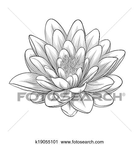 Clipart Of Black And White Lotus Flower Painted In Graphic Style