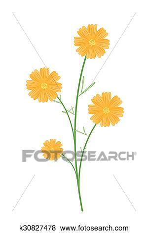 Clip Art - schön, gelb, kosmos, blumen, weiß, hintergrund k30827478 ...