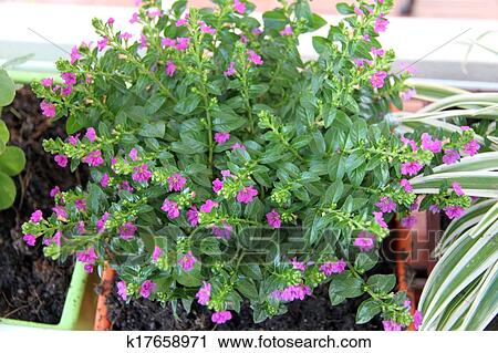 Tree In Potted With Small Purple Flowers Stock Image K17658971
