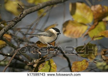 fotky z obrovských bielych vtáky