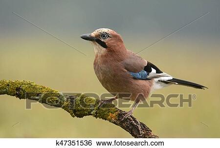 δωρεάν λήψη μεγάλο πουλί