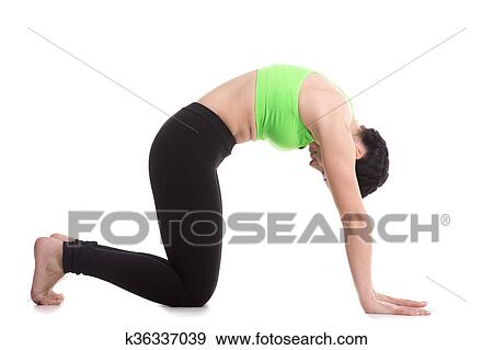cat yoga pose stock photo  k36337039  fotosearch