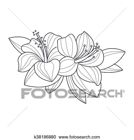 Hibiscus Fleur Monochrome Dessin Pour Livre Coloration Clipart