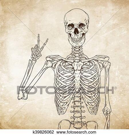 Human skeleton posing over old grunge paper background vector Clipart