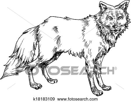 hand drawn wolf illustration