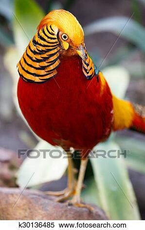 Μεγάλο πουλί που αρσενικά