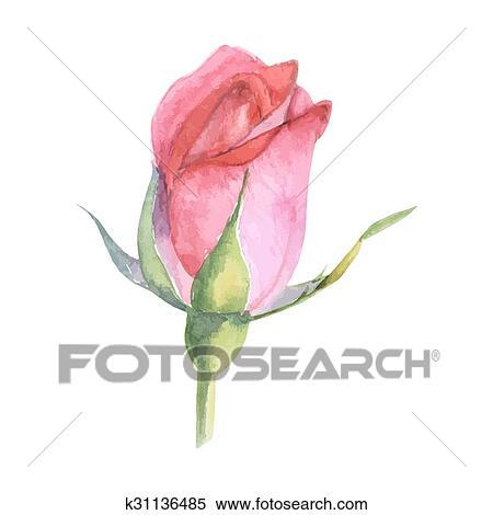 Clipart Beau Rose Aquarelle Main Peint Isole Blanc Arriere