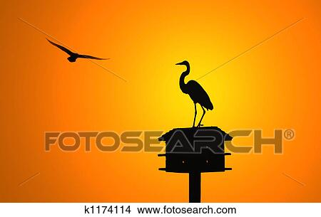 stock photo of egret silhouette k1174114 search stock images