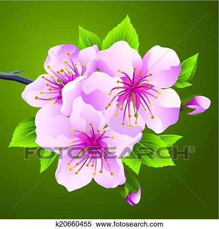 Clipart Floraison Branche De Japonaise Arbre Sakura K20660455