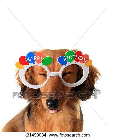 Archivio Fotografico Buon Compleanno Cucciolo K31490034 Cerca