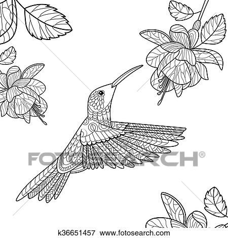Hummingbird coloring book for adults vector Clip Art
