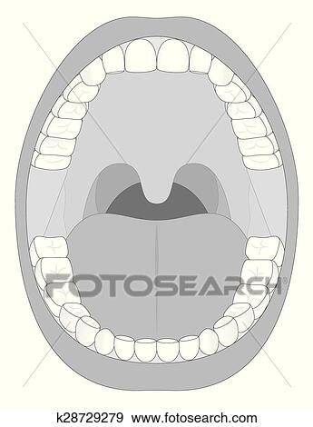 clip art of mouth teeth jaw outline k28729279 search clipart