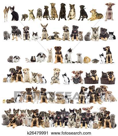 Archivio Fotografico Set Di Animali Domestici K26479991 Cerca