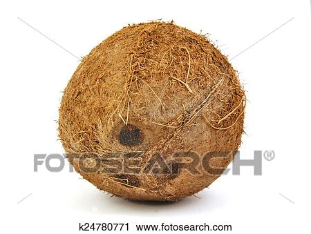 Clipart Of One Fresh Coconut On White Background K24780771