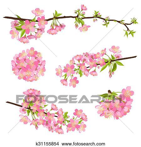 Clipart - hermoso, vector, flor de cerezo, ramas, -, japonés, sakura ...