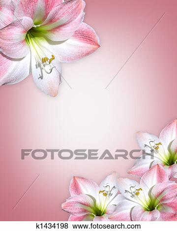 Stock illustration of amaryllis pink flowers border k1434198 stock illustration amaryllis pink flowers border fotosearch search eps clip art drawings mightylinksfo