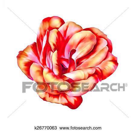 Dessin Beau Clair Rose Camelia Fleur Isole Blanc Fond