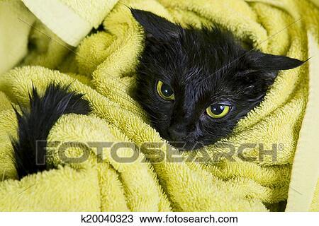 Bagnato bagnato nero bagnato micio