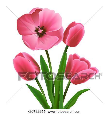 Clipart Tulipe Fleur Rose K20722655 Recherchez Des Clip Arts