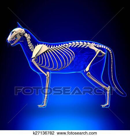 Clip Art Of Cat Skeleton Anatomy Anatomy Of A Cat Skeleton