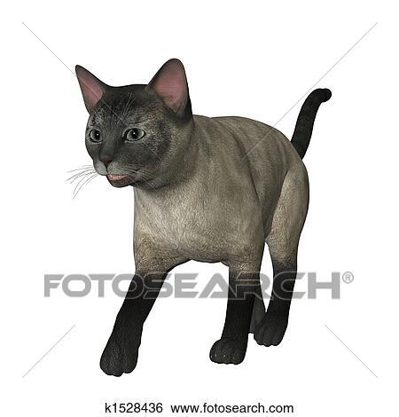 シャム 猫 イラスト K1528436 Fotosearch