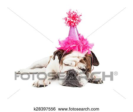 Funny Photo Of A Tired Bulldog Breed Dog Laying Down And Sleeping While Wearing Fancy Pink Birthday Hat