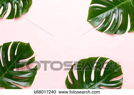 Tropical Jungle Leaf Monstera Resting On Flat Surface On Peach Background Stock Image K68017240 Fotosearch The top of the towel has the image printed on it, and the back is white cotton. tropical jungle leaf monstera resting