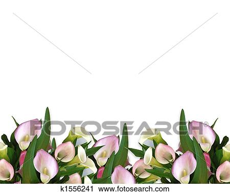 Calla Lilies Pink Border Clip Art K1556241 Fotosearch