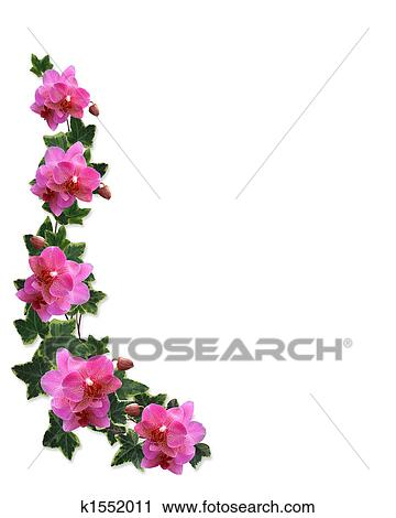 clipart of orchids and ivy border k1552011 search clip art