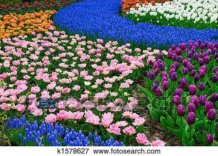 Jardin fleur Banque de Photo