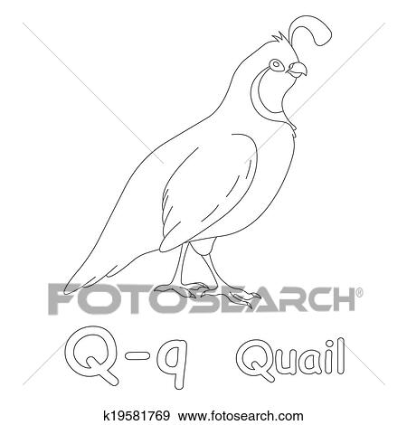Stock Illustration Of Q For Quail Coloring Page K19581769 Search