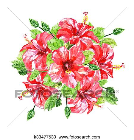 Bouquet From Red Watercolor Hibiscus Flowers Clipart K33477530