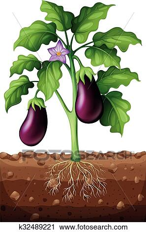 Eggplants On The Tree Clipart K32489221 Fotosearch