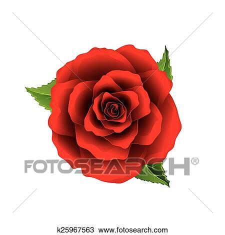 Rose Rouge Fleur Vue Dessus Isole Blanc Vecteur Clipart K25967563