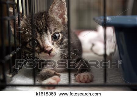 Chaton Dans Cage Banque De Photo
