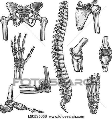 Osso E Conjunto Esbocos Jogo Para Medicina Desenho Clipart
